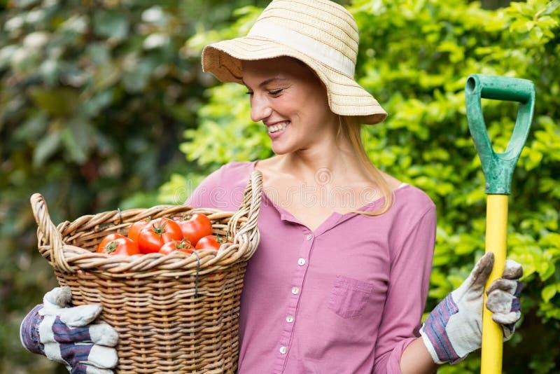 Jardinero feliz que sostiene la cesta del tomate y la herramienta del trabajo imagen de archivo