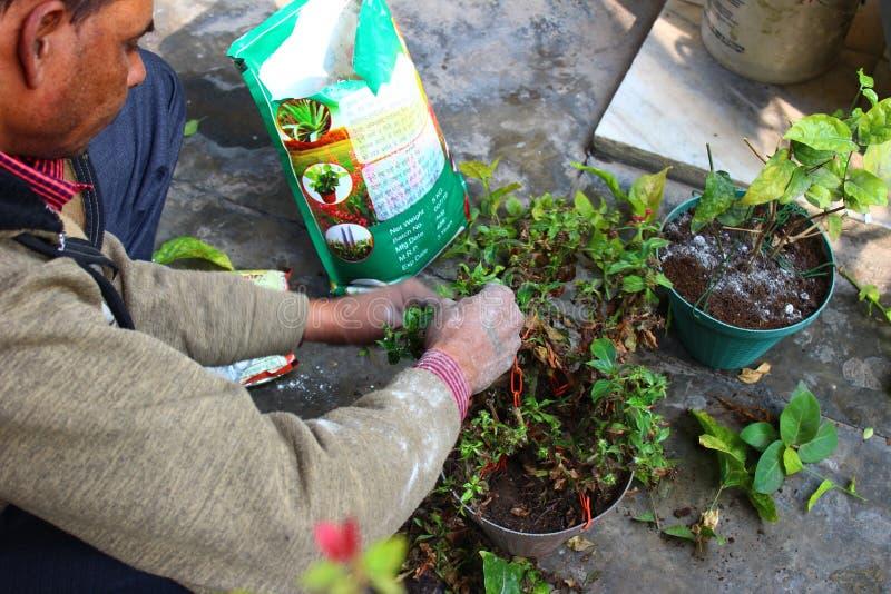 Jardinero indio de sexo masculino foto de archivo libre de regalías