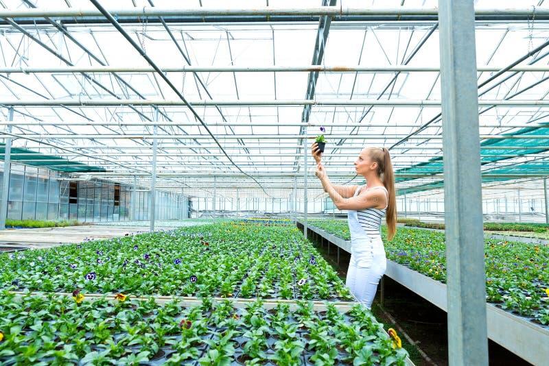 Jardinero joven que trabaja en un cuarto de niños grande del invernadero imágenes de archivo libres de regalías