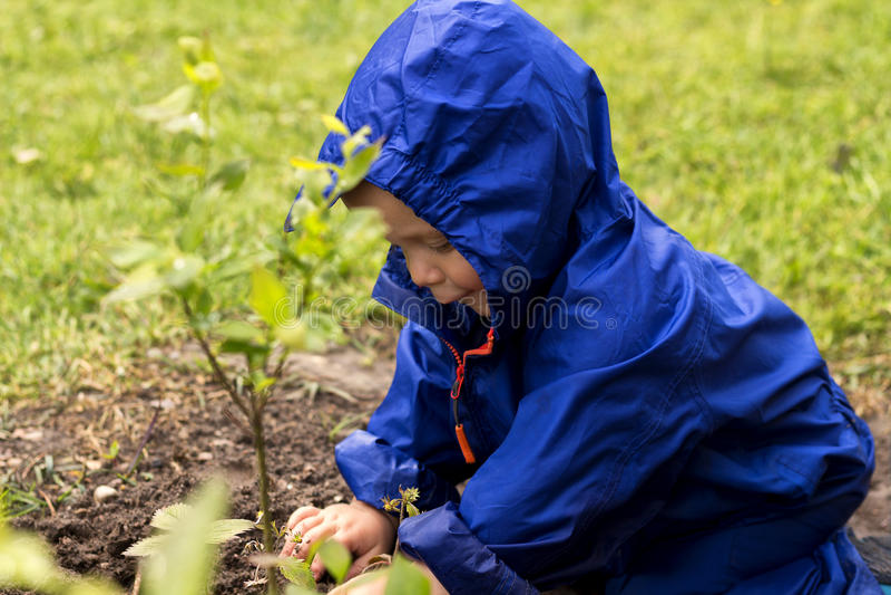 Jardinero joven siiting en patio trasero y que juega con las plantas Bebé lindo en un impermeable azul que se sienta en la hierba fotografía de archivo