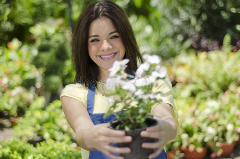 Jardinero lindo que entrega una planta foto de archivo