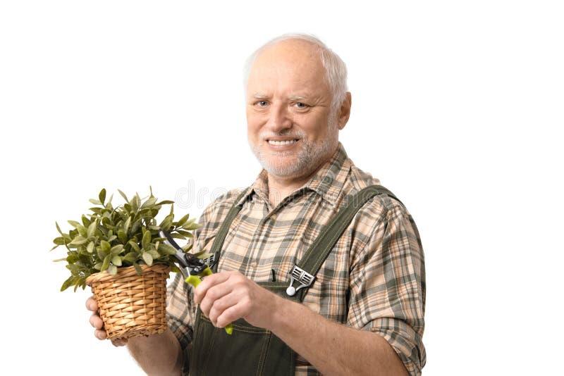 Jardinero mayor de la manía con las podadoras fotografía de archivo