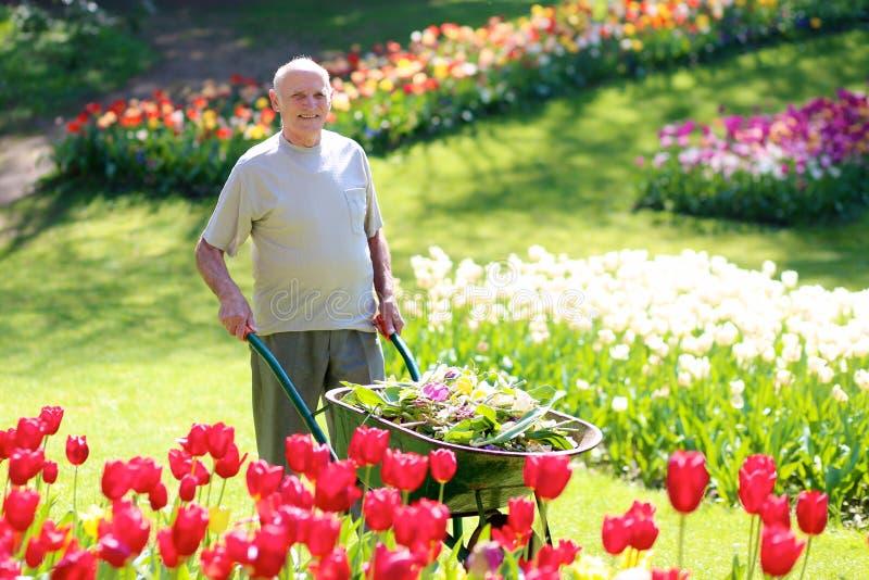 Jardinero mayor en el trabajo imagen de archivo libre de regalías