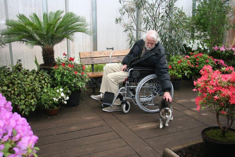 Jardinero mayor en silla de rueda y un gato en casa verde fotos de archivo