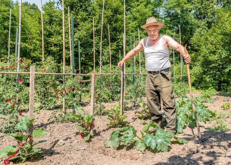 Jardinero mayor feliz en el trabajo fotografía de archivo libre de regalías