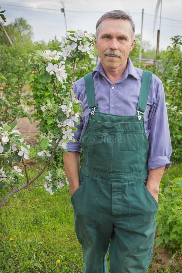 Jardinero mayor y los manzanos florecientes imágenes de archivo libres de regalías