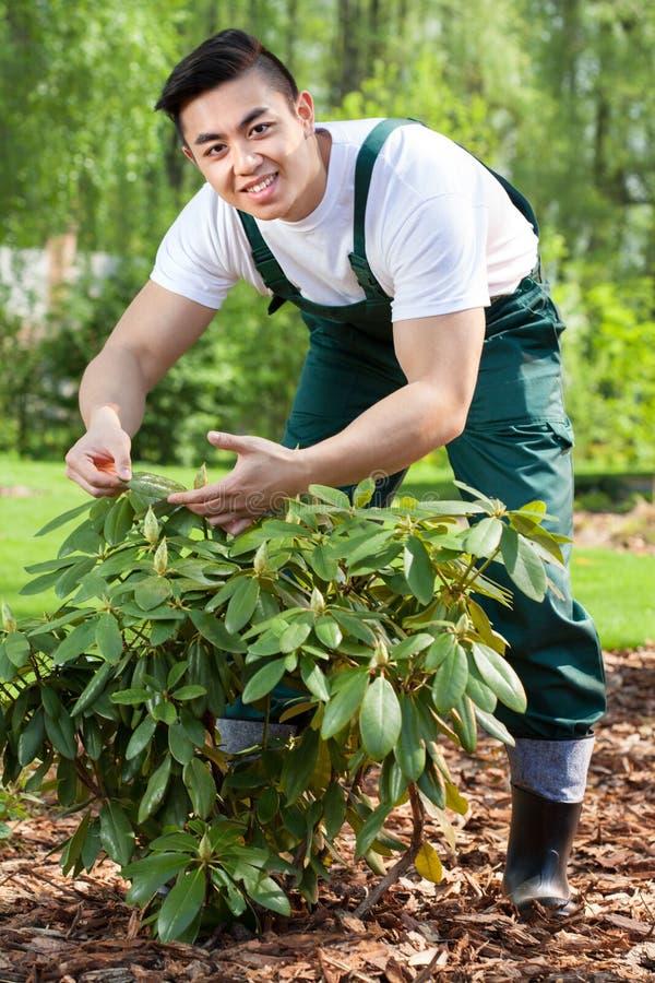 Jardinero que toma el cuidado de la planta foto de archivo libre de regalías