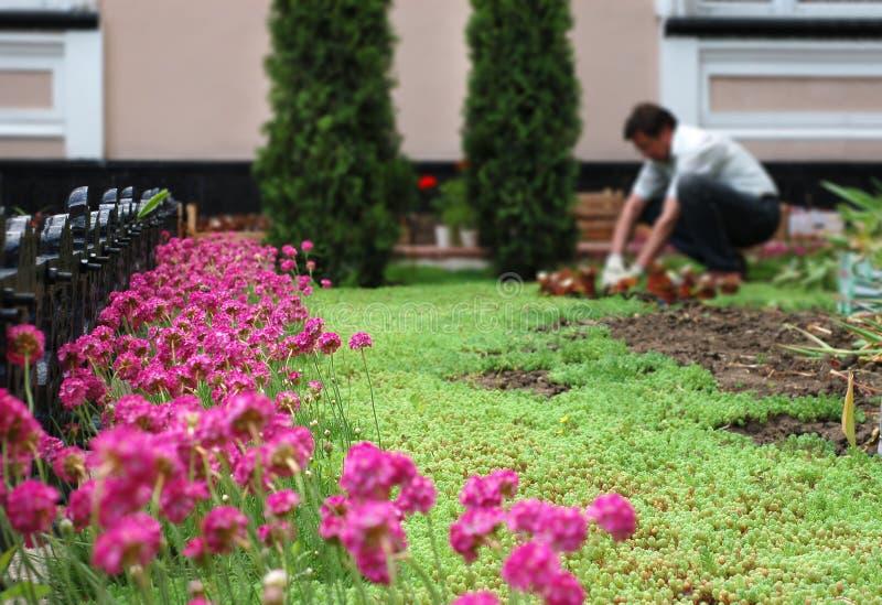 Jardinero que trabaja en la cama de flor imágenes de archivo libres de regalías