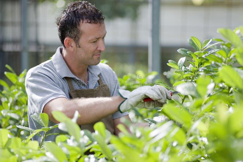 Jardinero sonriente foto de archivo