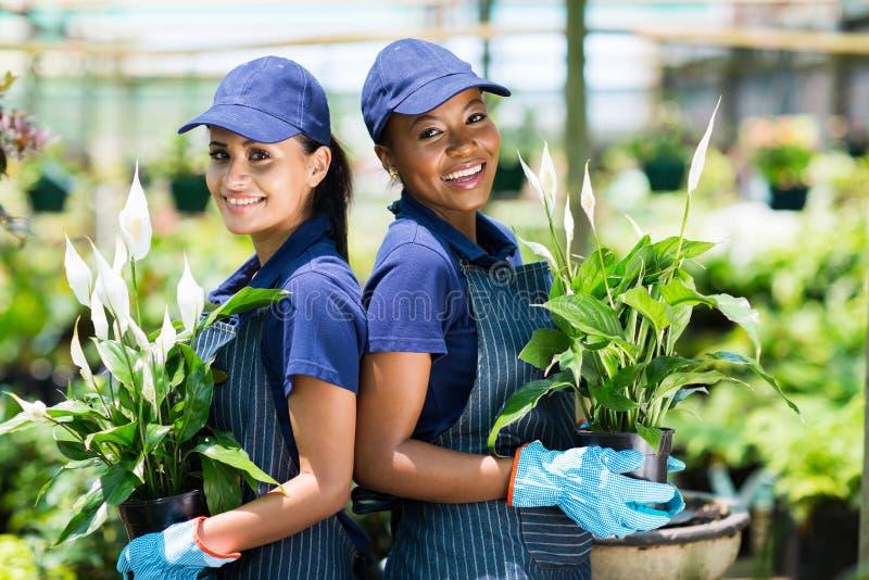 Jardineros en invernadero fotografía de archivo