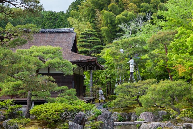 Jardineros japoneses que cuidan un árbol imagenes de archivo