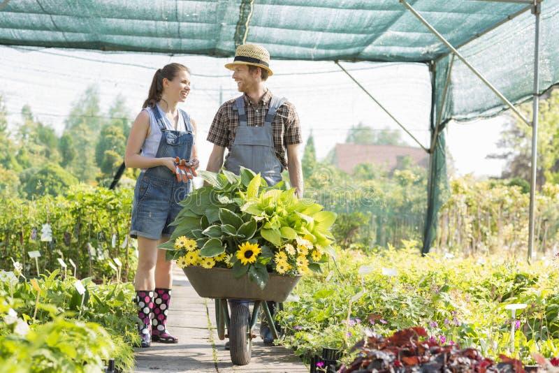 Jardineros que discuten mientras que empuja las plantas en carretilla en el invernadero imagen de archivo