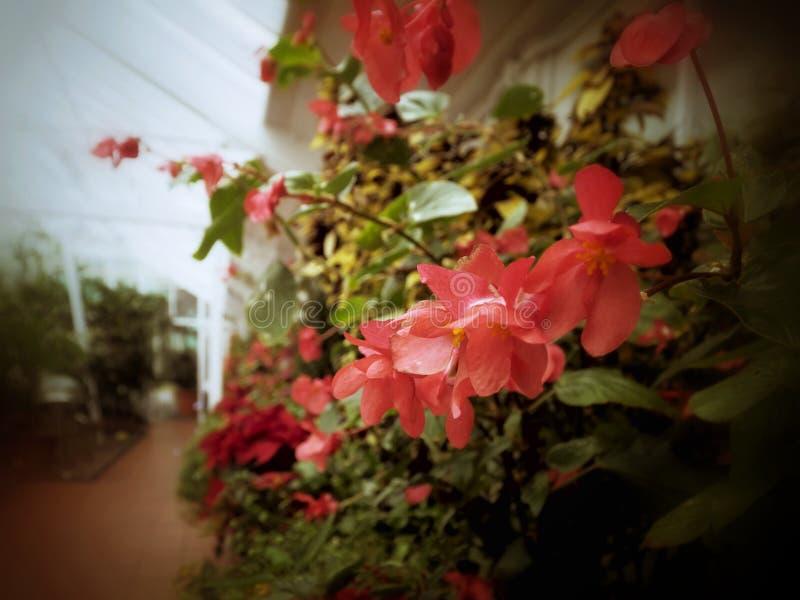 Download Jardines imagen de archivo. Imagen de horticultura, variado - 64205265