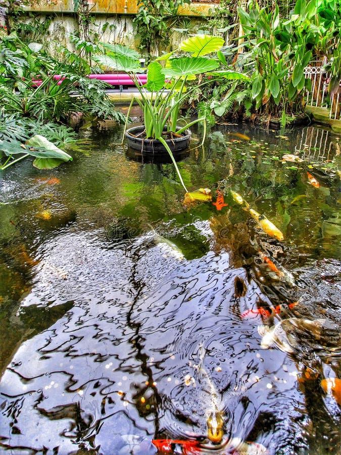 Download Jardines foto de archivo. Imagen de plantas, invernaderos - 64205330