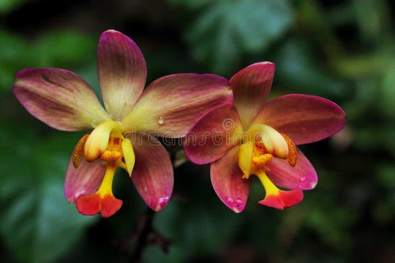 Jardines botánicos fotos de archivo libres de regalías