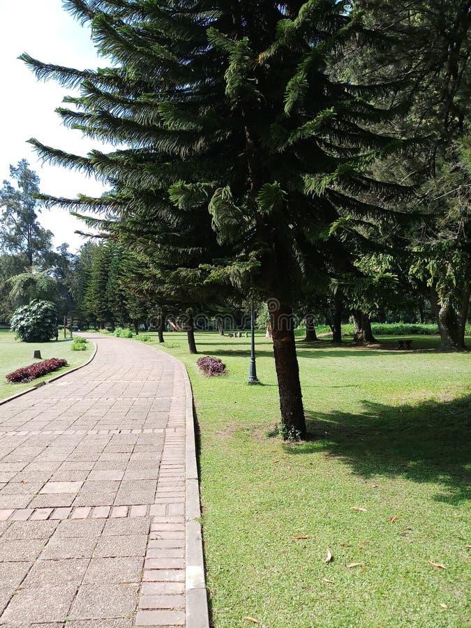 Jardines botánicos con camino verde fotos de archivo libres de regalías
