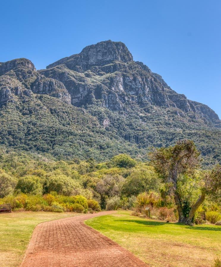 Jardines botánicos de Kirstenbosch en Cape Town, Suráfrica La trayectoria del ladrillo lleva a visitantes a través de los jardine imágenes de archivo libres de regalías