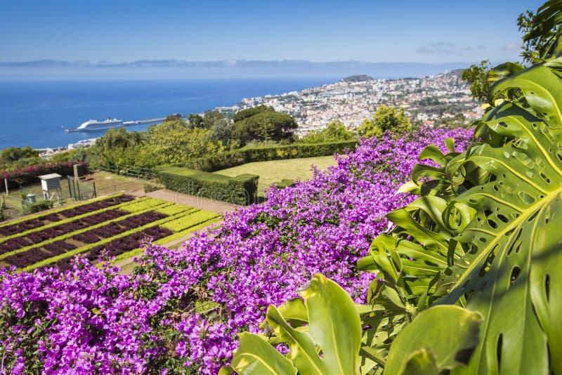 Jardines botánicos tropicales famosos en la ciudad de Funchal, Madeira islan imágenes de archivo libres de regalías