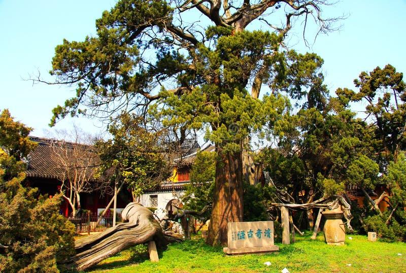 Jardines clásicos de Suzhou del chino imagen de archivo libre de regalías