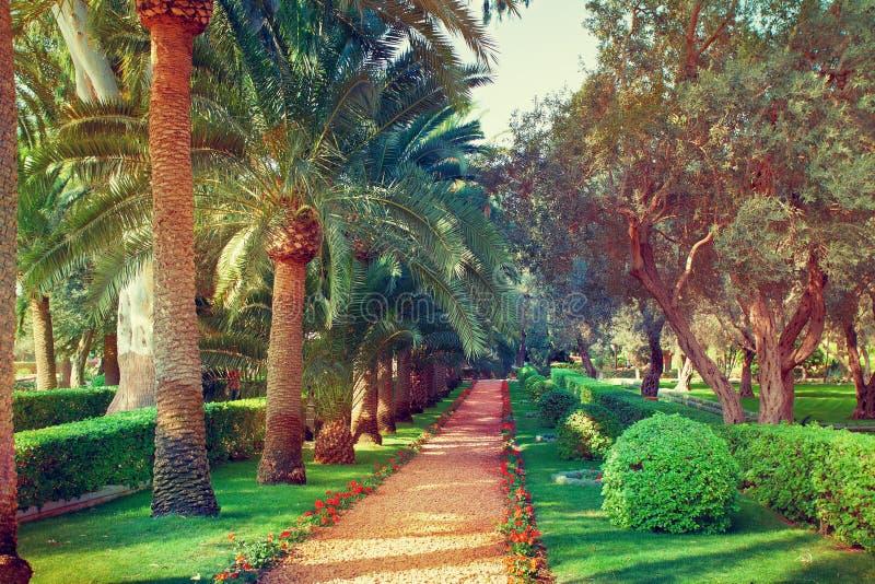 Jardines de Bahai fotografía de archivo libre de regalías