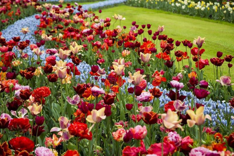 Jardines de keukenhof en la primavera imagen de archivo for Jardines de primavera