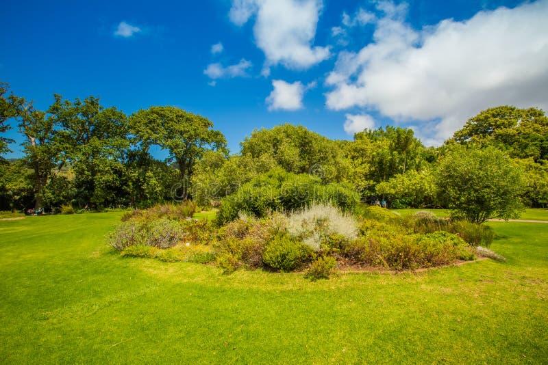 Jardines de Kirstenbosch fotografía de archivo