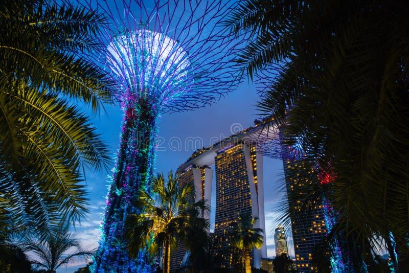 Jardines de Singapur por la bahía con la arboleda de Supertree en la noche foto de archivo libre de regalías