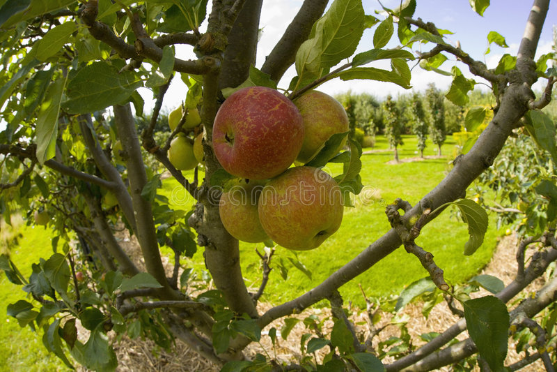 Jardines orgánicos Warwickshire midlands Inglaterra del ryton del ryton del jardín fotografía de archivo libre de regalías
