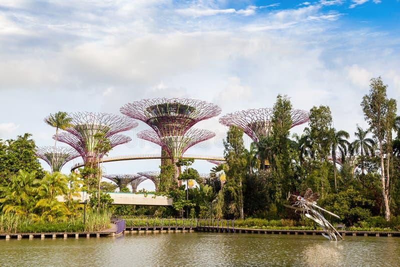 Jardines por el parque de naturaleza de la bahía en Singapur foto de archivo