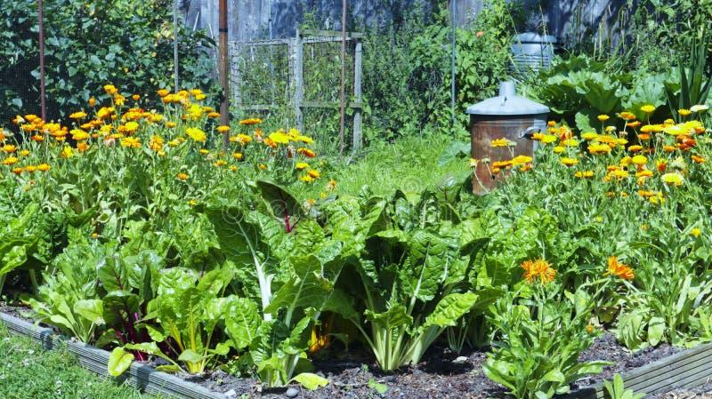 Jardines, remolacha y naranjas suizos fotos de archivo