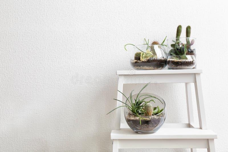 Jardines suculentos en los floreros de cristal fotos de archivo libres de regalías