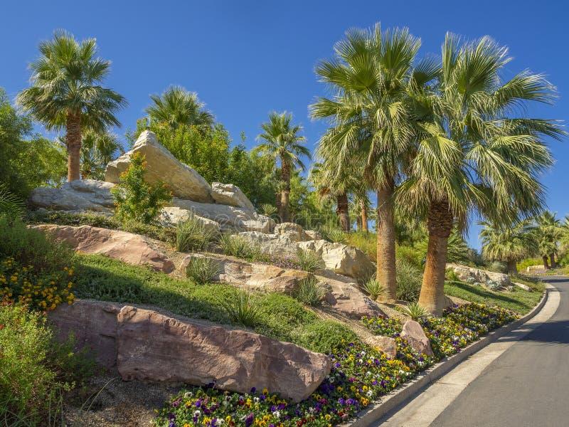 Jardines tropicales en Arizona, Estados Unidos foto de archivo libre de regalías