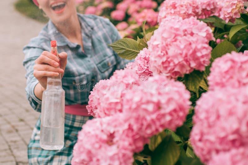 jardinière heureuse de femme avec des fleurs Fleurs de serre chaude Soin et arrosage de fleur sols et engrais hydrangea images libres de droits