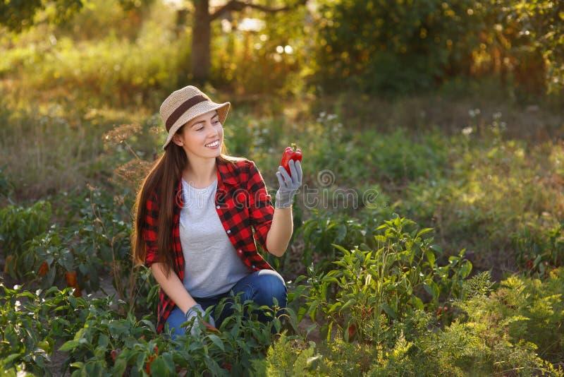 Jardinière heureuse de femme avec le paprika image stock