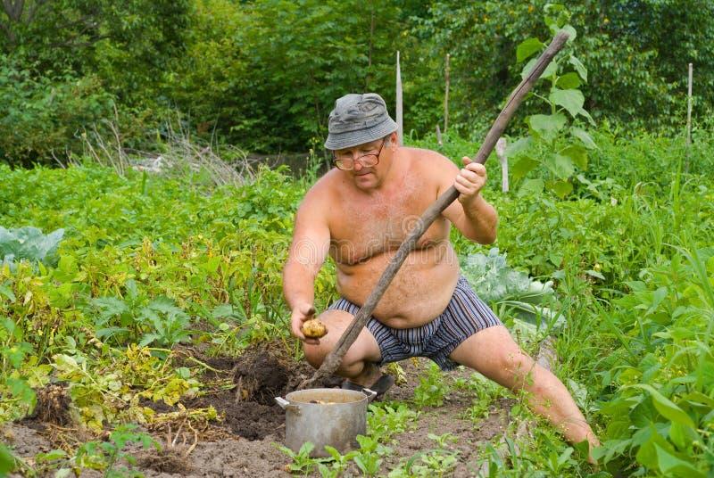 Jardinier 11 photo stock