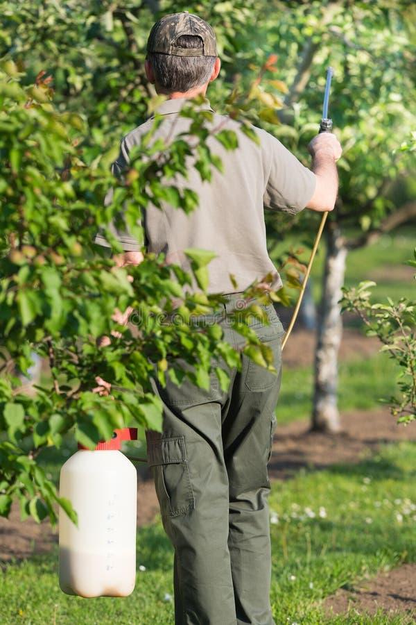 Jardinier appliquant un engrais d'insecticide à ses arbustes de fruit photos libres de droits