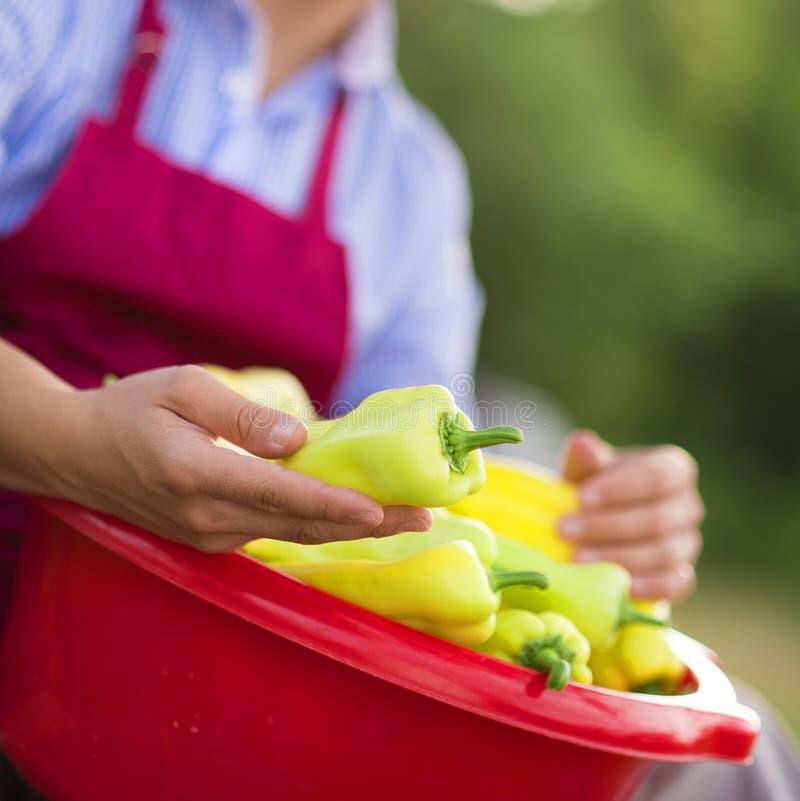 Jardinier avec des poivrons photographie stock libre de droits