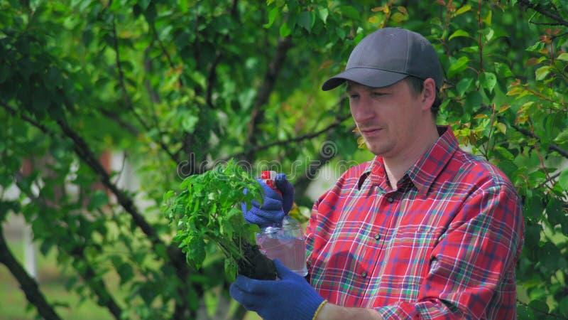 Jardinier avec la racine dans le jardin image libre de droits