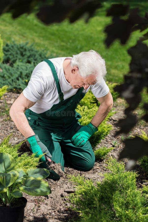 Jardinier creusant dans la terre photo libre de droits