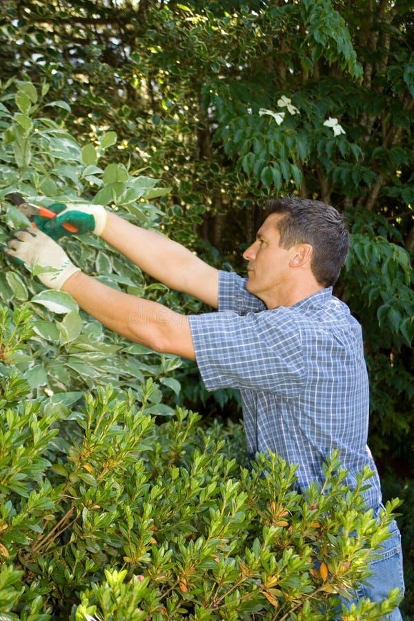 Jardinier d'élagage photo stock