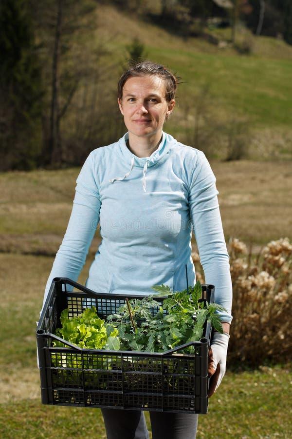 Jardinier de femme montrant à jeunes plantes la collection prête à être planté sur le jardin photos libres de droits