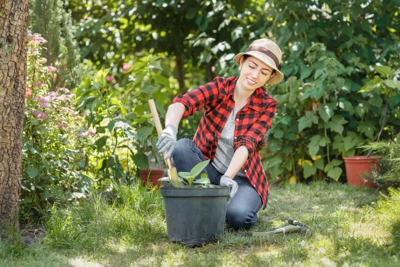 Jardinier de femme plantant des fleurs photo libre de droits