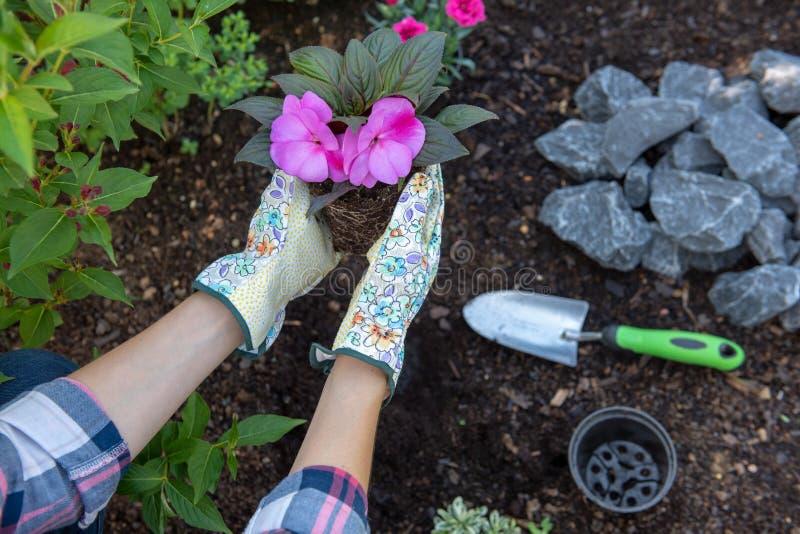Jardinier féminin méconnaissable jugeant une usine fleurissante prête à être planté dans son jardin Concept de jardinage photos stock