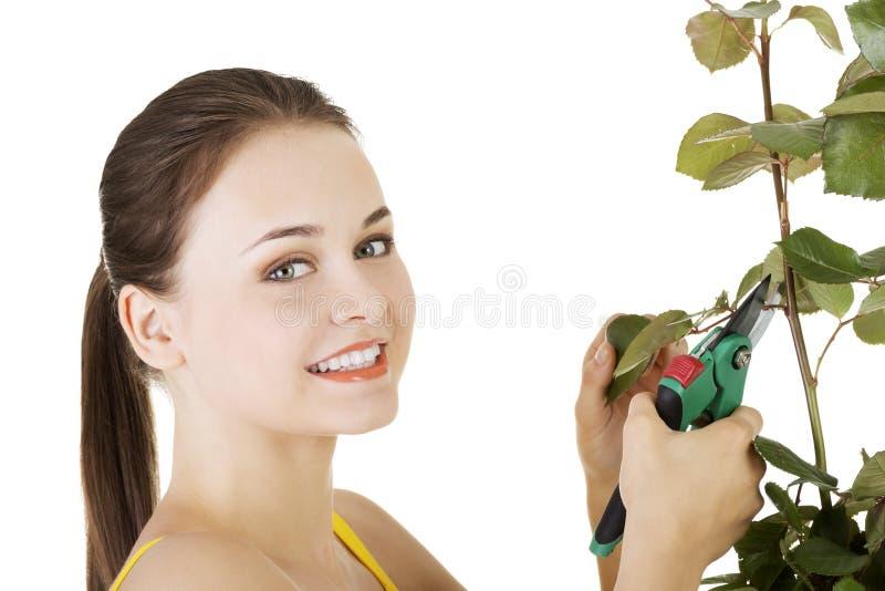 Jardinier heureux employant des ciseaux d'élagage. image stock