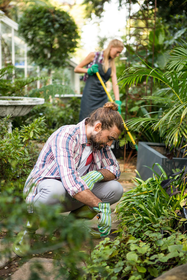 Jardinier masculin plantant au jardin de la communauté photos stock