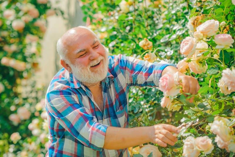 Jardinier a?n? Un grand-père travaillent en fleurs se garent Ressort et passe-temps photo stock