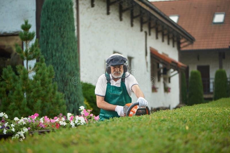 Jardinier plus âgé professionnel dans les buissons cuttiing uniformes images stock