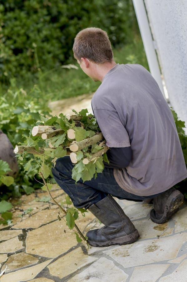 Jardinier réduisant des branches images libres de droits