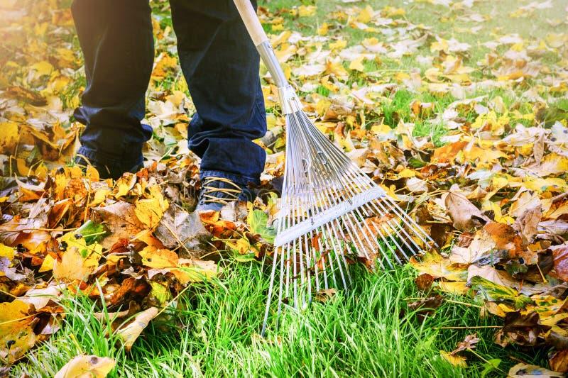 Jardinier ratissant des feuilles de chute dans le jardin photo stock