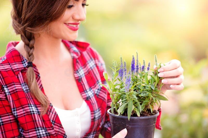 Jardinier tenant la jeune plante dans le pot de fleur, nature ensoleillée verte photographie stock libre de droits